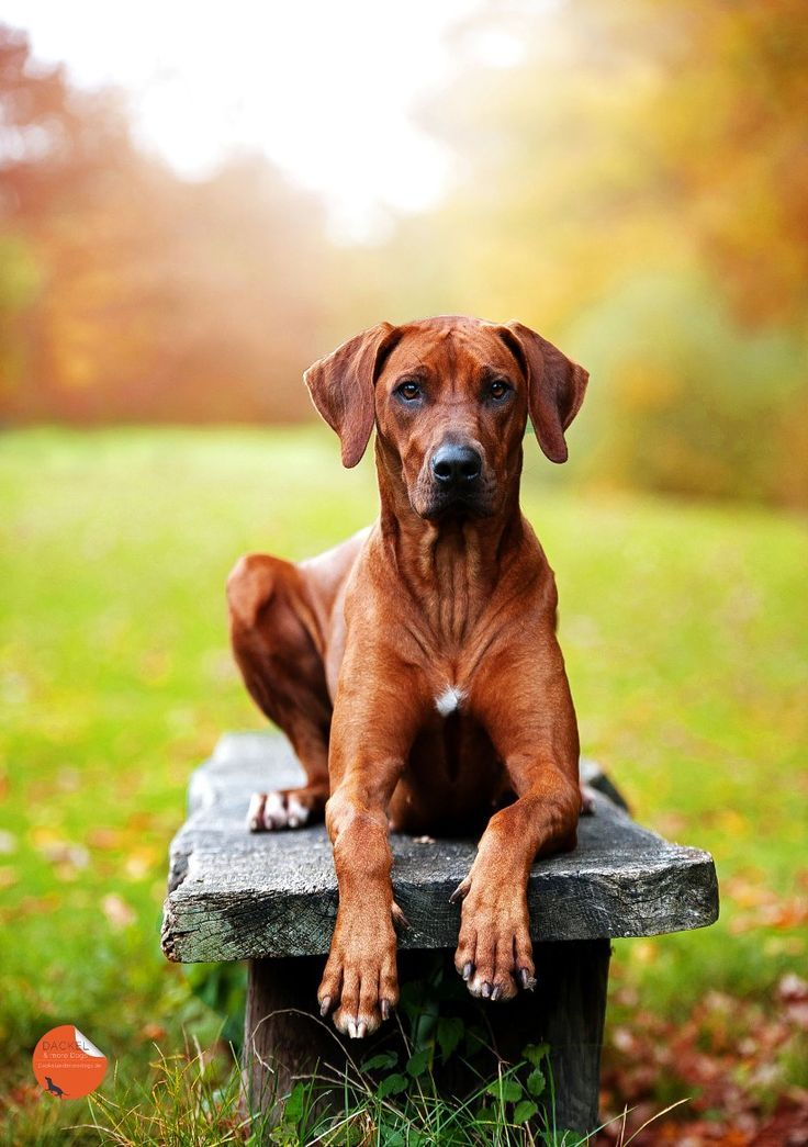 Top 5 Dog Breeds That Bark Least
