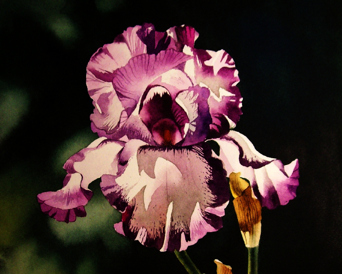 Contemporary realism sun drenched purple white iris sun drenched purple white iris izmirmasajfo