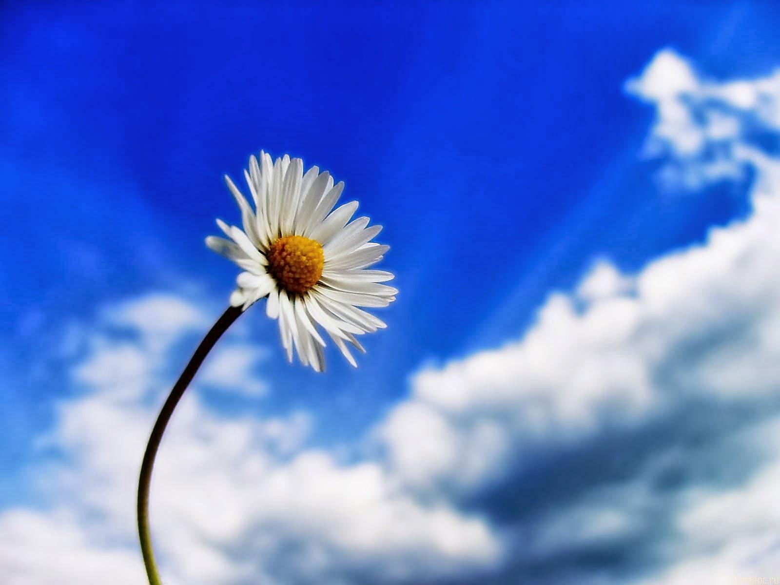 """<img src=""""http://1.bp.blogspot.com/-bTn7ReXjns4/Ut_qGeC1QsI/AAAAAAAAJtg/zKAKPiLgGKY/s1600/beautiful-sky-white-flower.jpg"""" alt=""""beautiful sky white flower"""" />"""