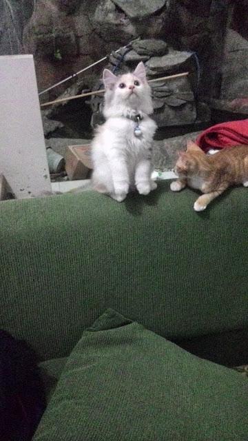 foto-kucing-imut_07