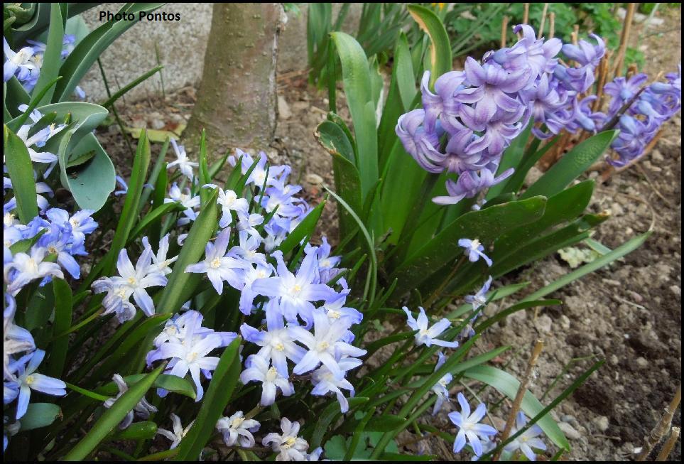 Un giardino di perenni in ticino piante da bakker for Bakker piante perenni