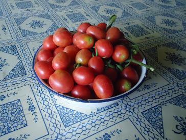 Tomates cerejinha