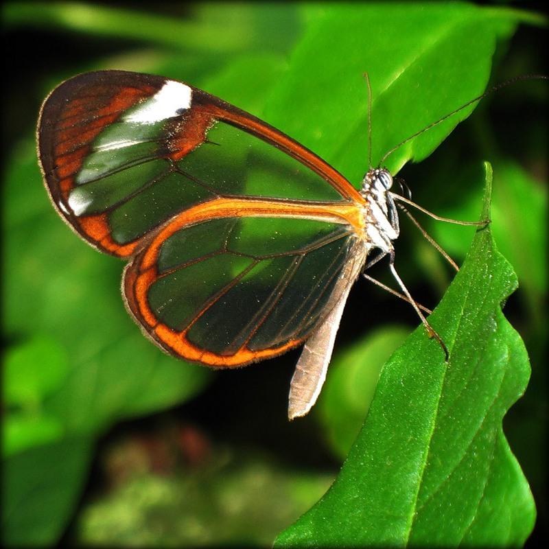 Коллекция картинок: «Крылья лета»: madamkartinki.blogspot.ru/2013/01/blog-post_30.html