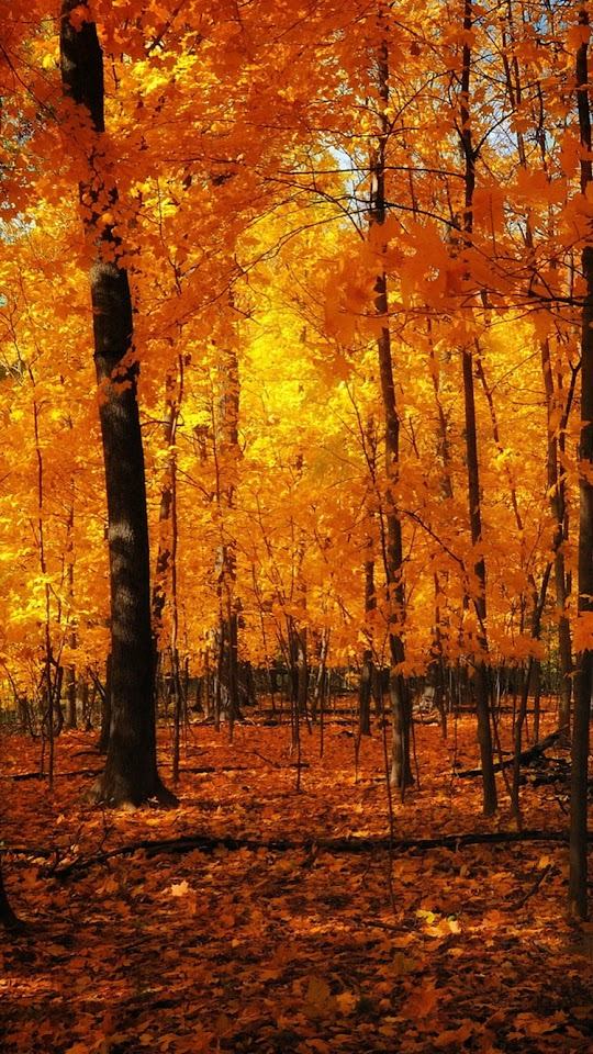 Orange Forest Autumn  Galaxy Note HD Wallpaper