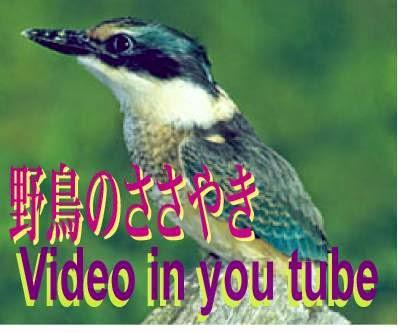 野鳥のささやき ビデオ in you tube