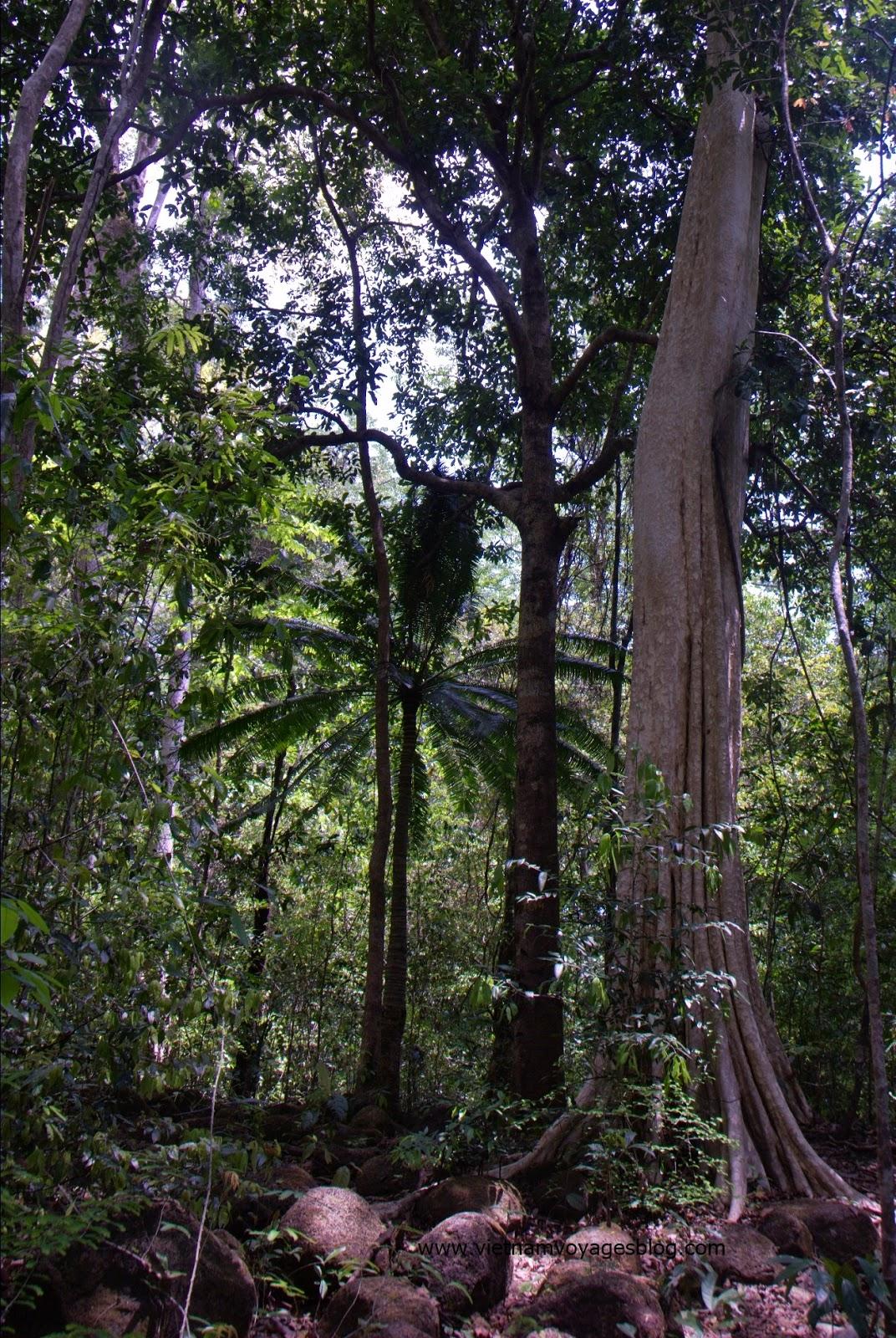 Tham quan du lịch tại vườn quốc gia Nam Cát Tiên, Đồng Nai