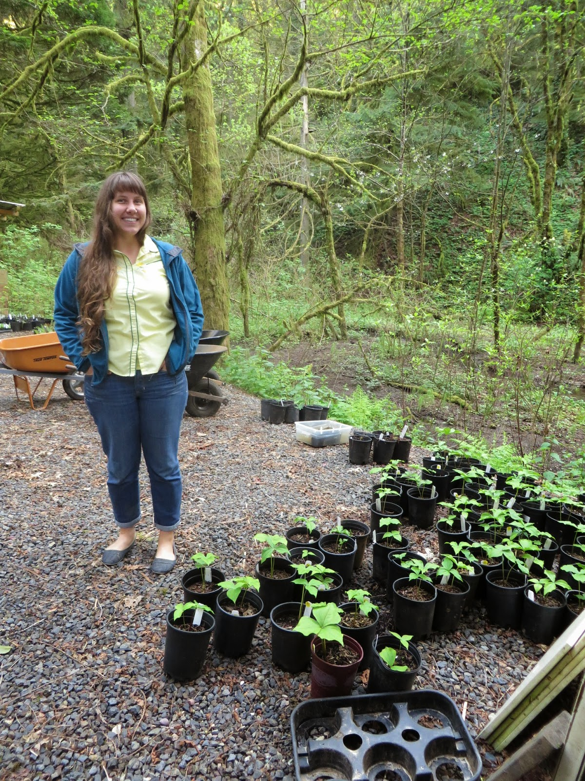 Bon The Wonderful Nikkie West Of The Backyard Habitat Certification Program  Amongst Trilliums From A Plant Sale.