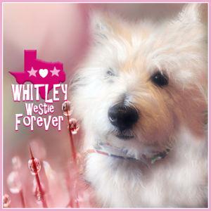 R.I.P. Whitley