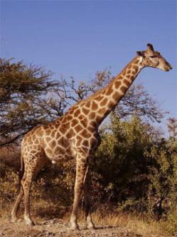Dez curiosidades sobre animais