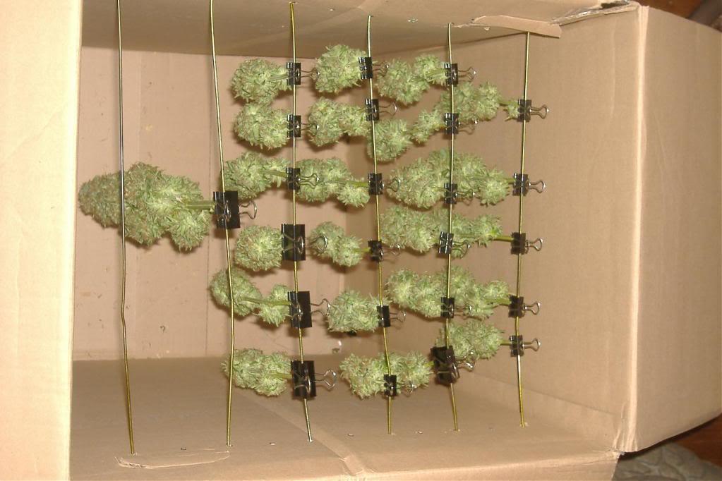 La pagina para los cultivadores de cannabis recolecci n secado y curado - Armarios de interior de marihuana ...