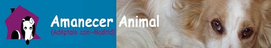 AMANECER ANIMAL