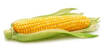 Asal usul jagung