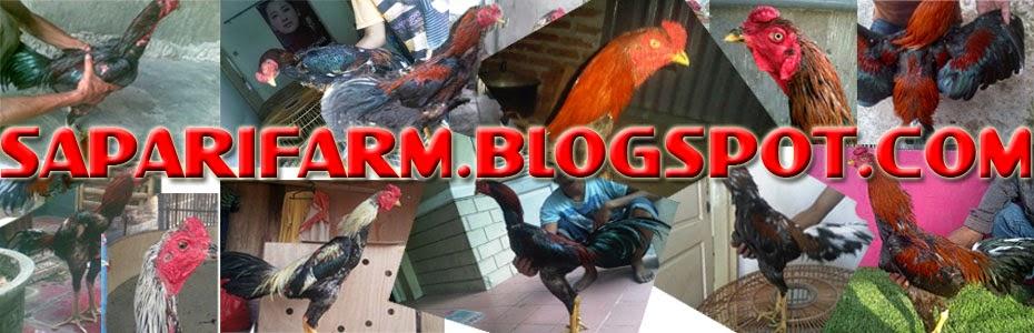 Saparifarm Surabaya: Peternak Ayam Aduan, Ayam Birma, Bangkok, Pakhoy ...