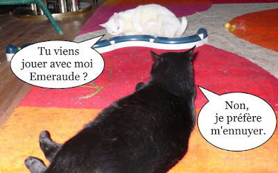 Chats noir et blanc s'ennuient.
