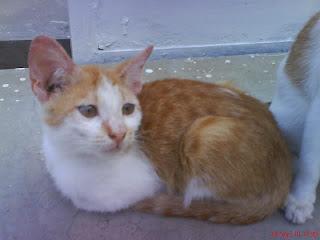 Cerita Kucing 2 : Kisah Kucing di Gang Kaswari