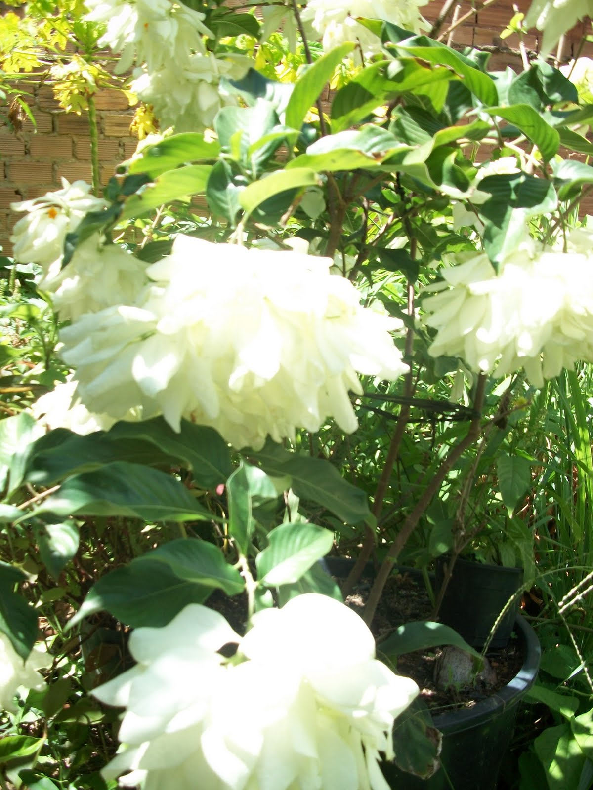 flores no jardim de deus : flores no jardim de deus:Casa Das Plantas Jardim de Deus