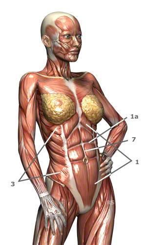 Wie ich meinen Bauch tunlichst nicht trainieren sollte. Mythos: Sit ...