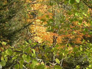 Fall colors in Ely Minnesota http://huismanconcepts.com/