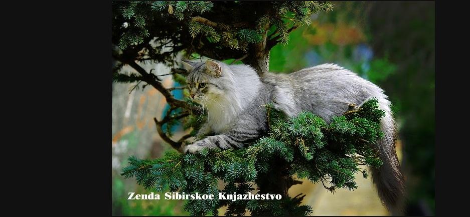 Zenda Sibirskoe Knjazhestvo / Зенда Сибирское Княжество