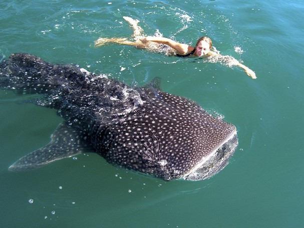 People swimming with whales