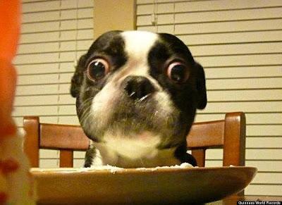 Bruschi: Dog With World's Largest Eyes