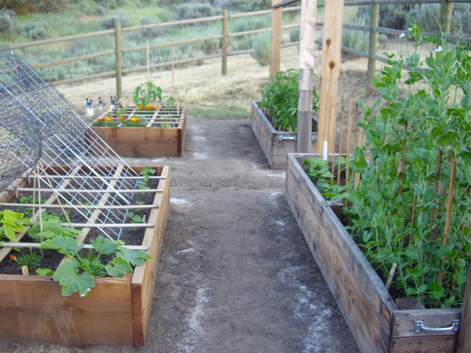 Homestead Revival Benefits And Construction Of Raised Beds For Vegetable Gardening