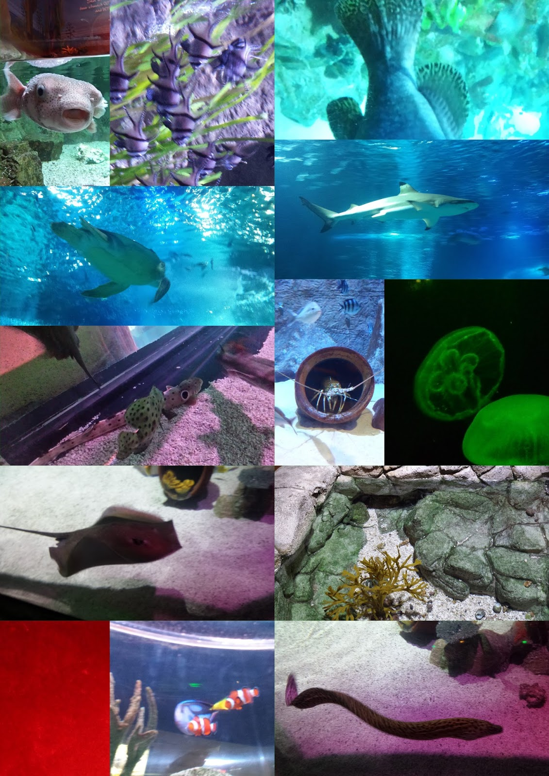 Frugal Shopping And More Sea Life Arizona Aquarium Is A