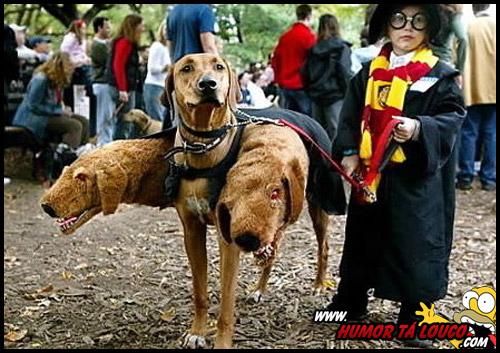 O melhor cosplay de Harry Potter que já visto - Cachorro de três cabeças