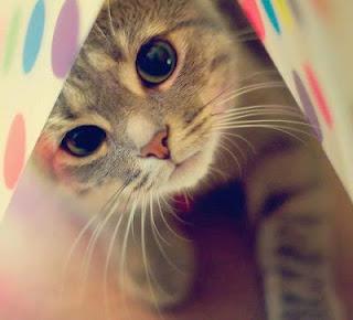 gatito con mirada tierna