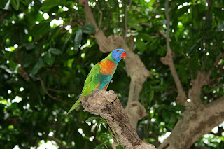 Bij birds of paradise hebben we het over paradijselijke toestanden.