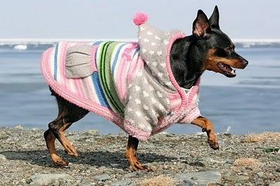 حيوانات منزلية ترتدي ملابس جميلة-طرائف-منتهى