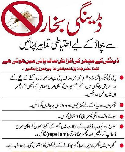 essay on dengue fever in pakistan 2011