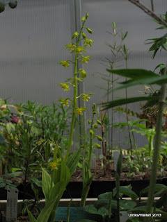 växthus spezialplant