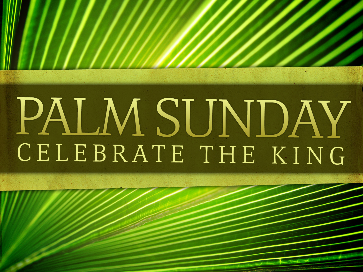 Palm Sunday Palm Sunday of The Passion of