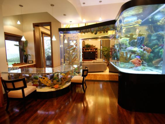 the hawaiian home blog indoor home aquariums inspiration