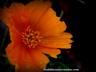 wet orange flower