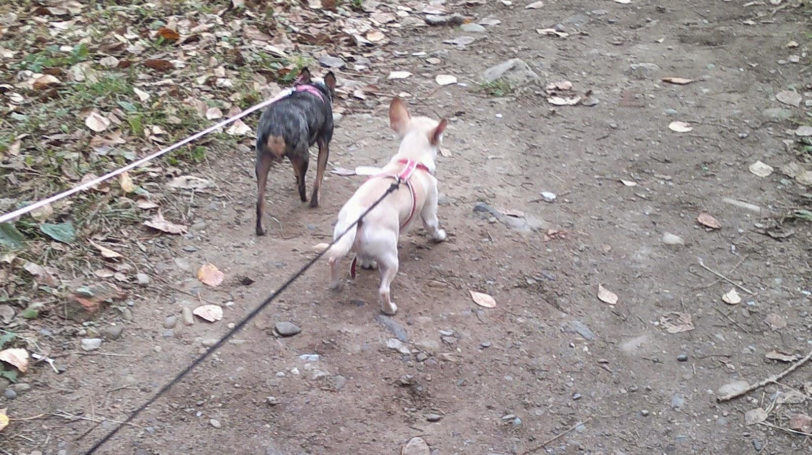 Прогулка с собаками подходит к концу