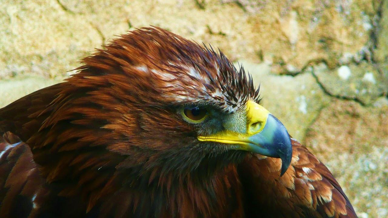 Vögel (Klasse Aves oder Clade Avialae)