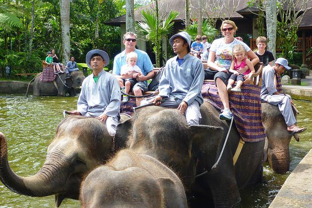 Elephant Back Safari Only (Program Safari Naik Gajah)