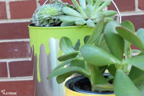 Succulents like Jade are easy to care for and look cute in these planters.