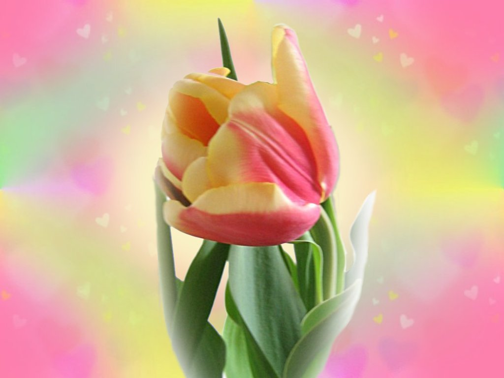 flower wallpaper wallpaper cartoon