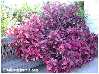 Jardiner a factores clim ticos - Plantas resistentes al sol para terrazas ...
