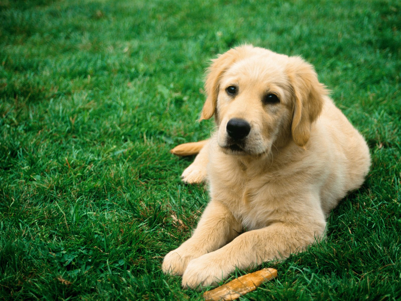 cute dog | baby dog hd wallpapers free download 1080p | wallpapers