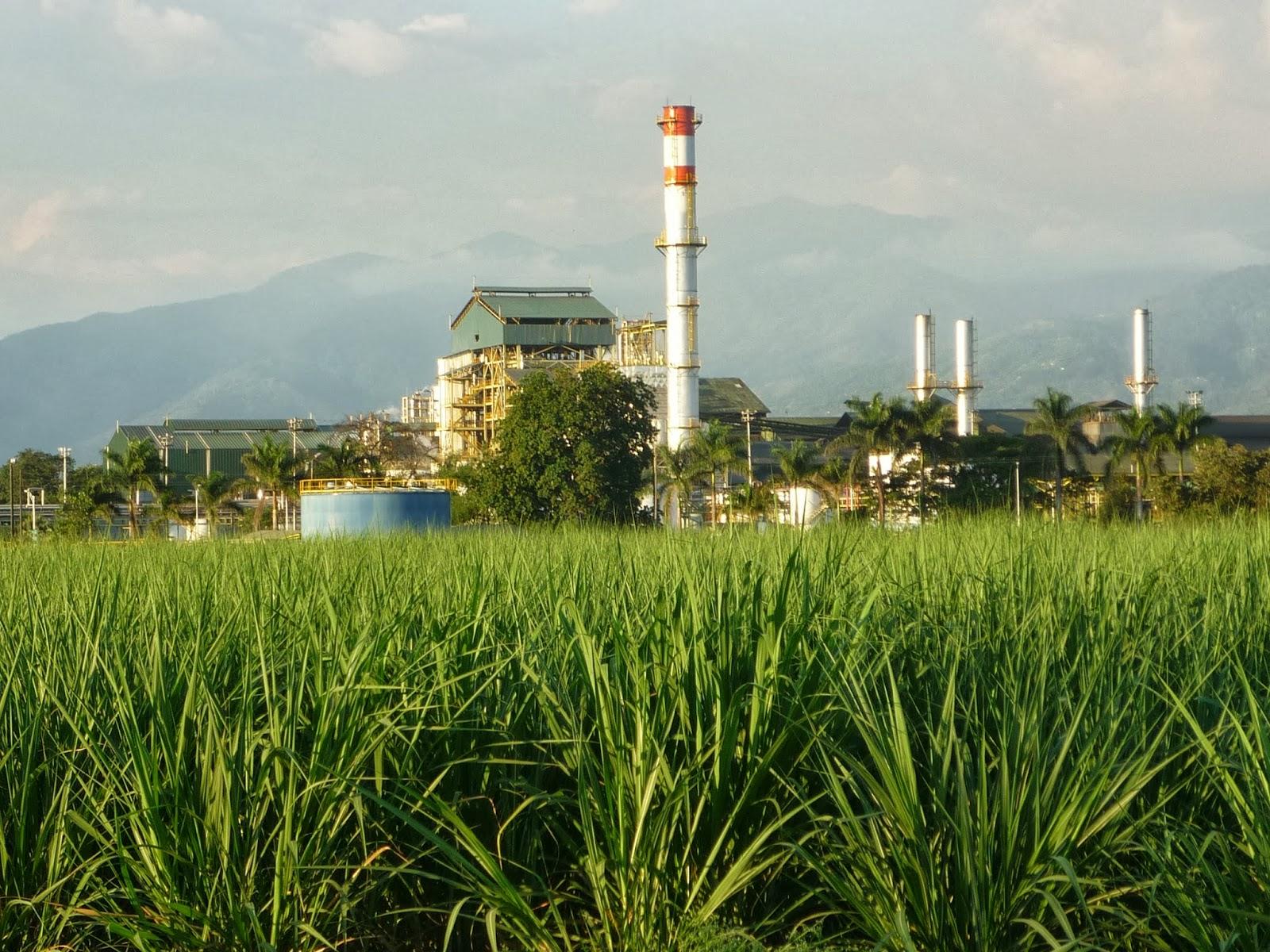 Circuito Productivo De La Caña De Azucar : El circuito productivo de la azúcar thinglink