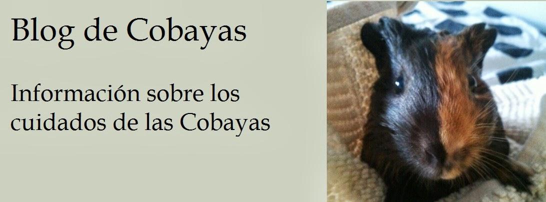 Blog de Cobayas