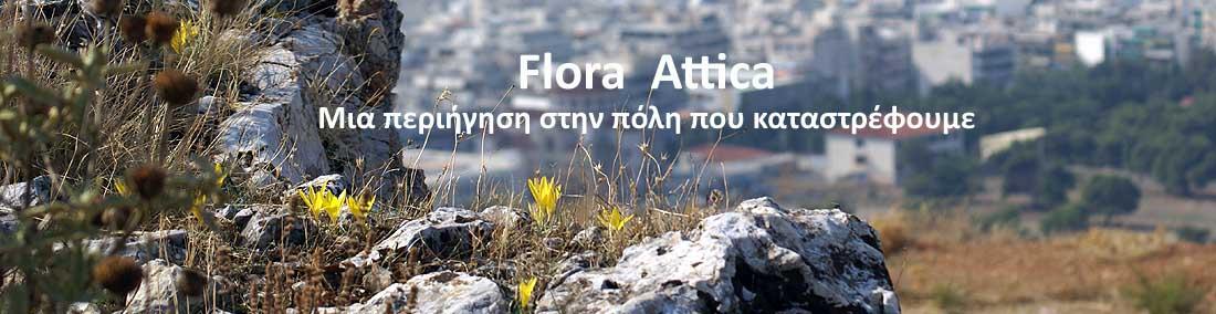Flora Attica