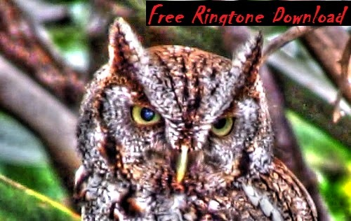 Haunting Screech Owl Call Ringtone Free Download