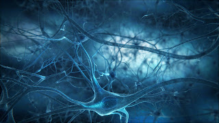 Researchers Retrieve 'Lost' Memories
