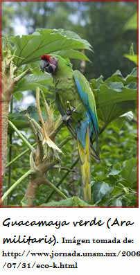 RESERVA DE LA BIOSFERA SIERRA GORDA :v Abio-guacamayeverde