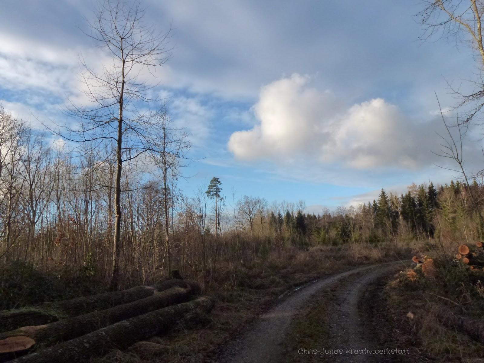 Waldweg Januar